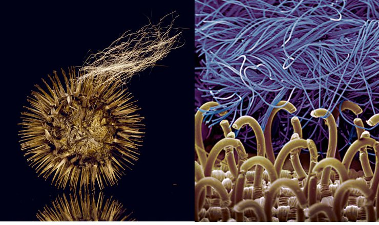 biomimicry-velcro