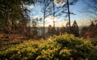 Webinar: Cinque azioni per cambiare il mondo
